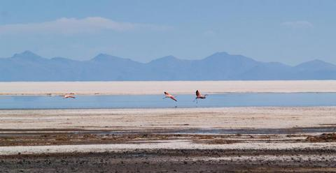 Flamingos on the salar